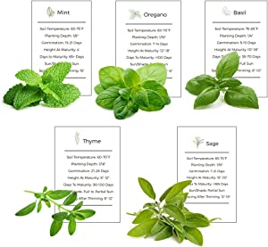 Environet Herb Garden Seeds Collection - 5 Culinary Herb Seeds Pack - Basil, Mint, Oregano, Sage and Thyme, Heirloom Seeds for Planting