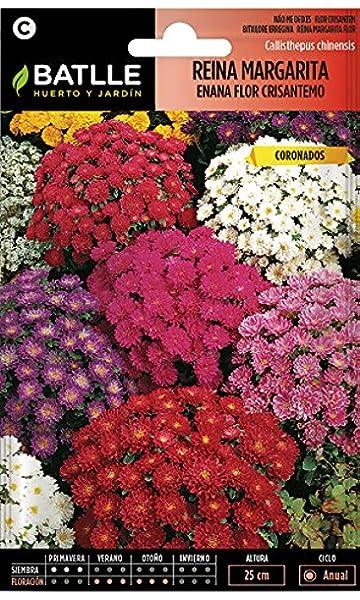 Semillas de Flores - Reina Margarita enana flor Crisantemo variada - Batlle: Amazon.es: Jardín