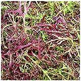 Mustard Mizuna Red Streaks - 100 Samen