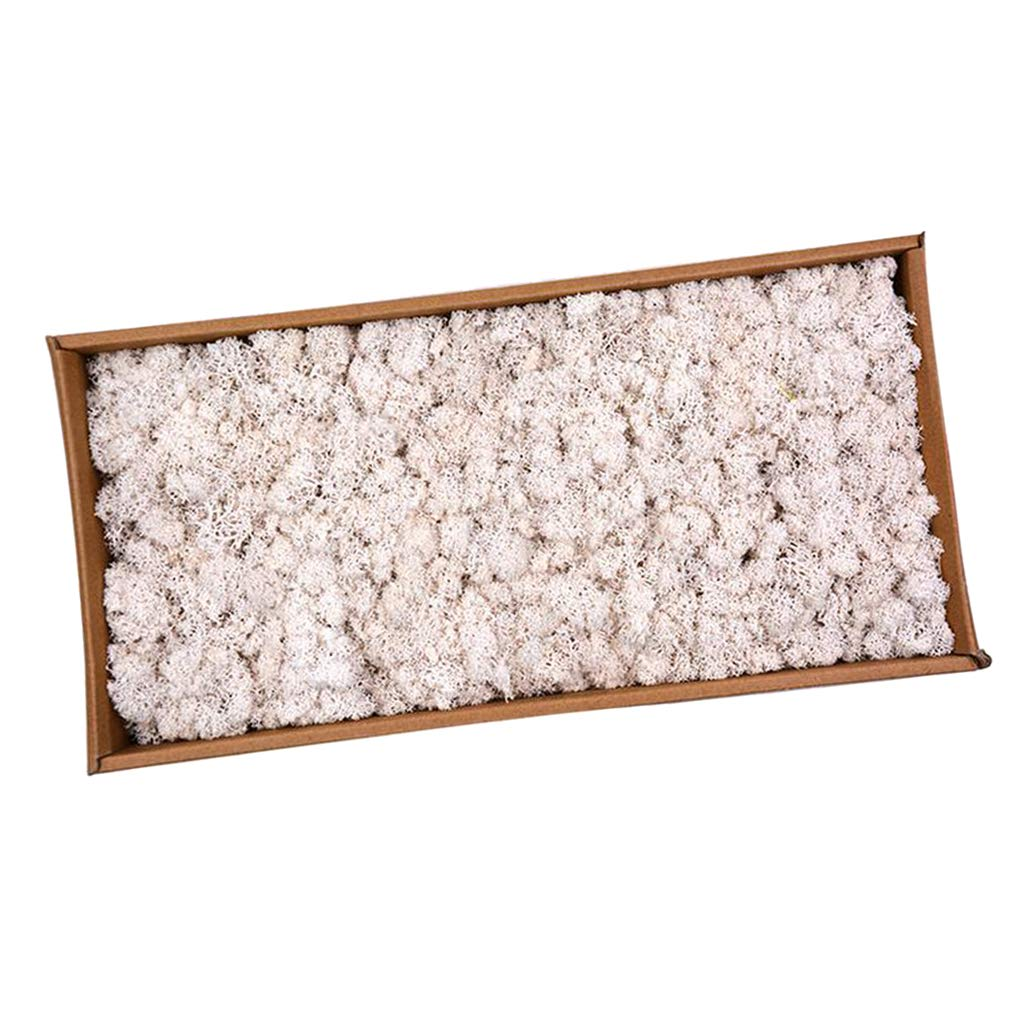 DYNWAVE Natural Norwegian Reindeer Moss Preserved Dried Crafts Flower for Flowers Grass Plants Home Garden Garland Wedding Party - White
