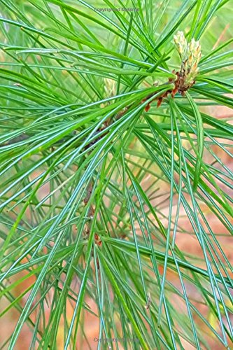 Download Fresh Spring Pine Needles Journal: (Notebook, Diary, Blank Book) (Nature Photo Journals Notebooks Diaries) pdf epub