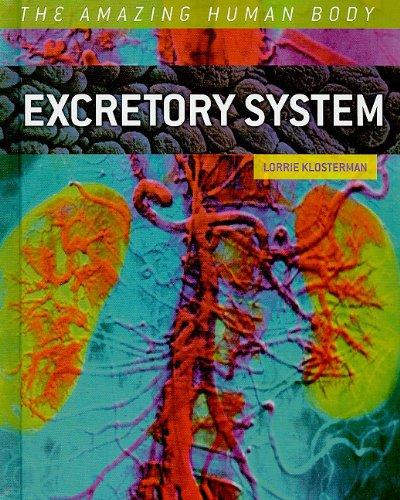 (Excretory System (The Amazing Human)