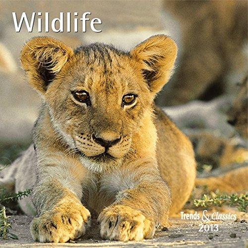 Wildlife 2013. Trends & Classics Kalender