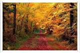 Tin Sign Poster #27705 Path Through The Autumn Woods (20x30cm) By Nature Scene Painting