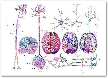 Póster de neuronas de anatomía del cerebro, pinturas
