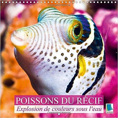 Lire en ligne Explosion de Couleurs Sous la Mer : Poissons du Recif: Poissons et Coraux pdf epub