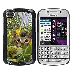 TopCaseStore / la caja del caucho duro de la cubierta de protección de la piel - Cute Kitten Cat In Field - BlackBerry Q10
