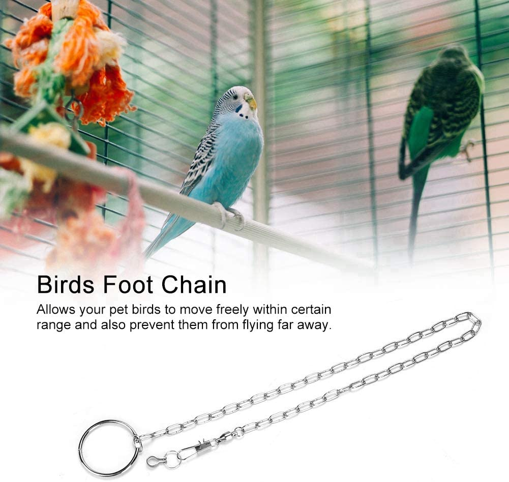 Stainless Steel Anti Flying Pet Birds Anklet Ring Training Harness for Different Kinds and Sizes of Parrots HEEPDD Parrot Foot Chain Pyrrhura molinae