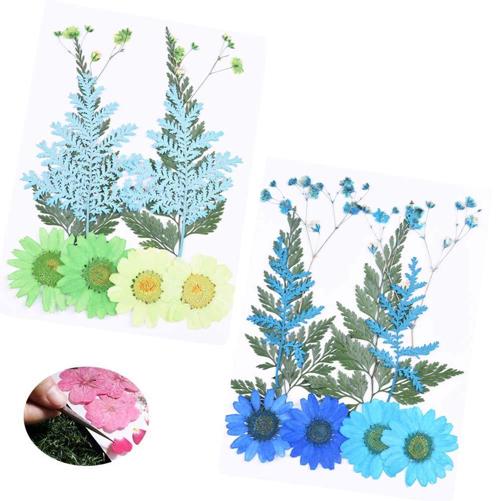 Daimay 20 PCS Flores Secas Naturales Flores prensadas reales m/últiples mezcladas Surtido de colores para Joyer/ía de resina de bricolaje Decoraciones florales para u/ñas Azul y verde