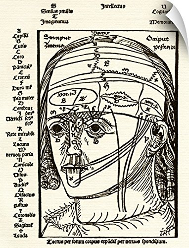 Sheila Terry Wall Peel Wall Art Print entitled Brain anatomy, 16th century diagram - Diagram Nose Anatomy