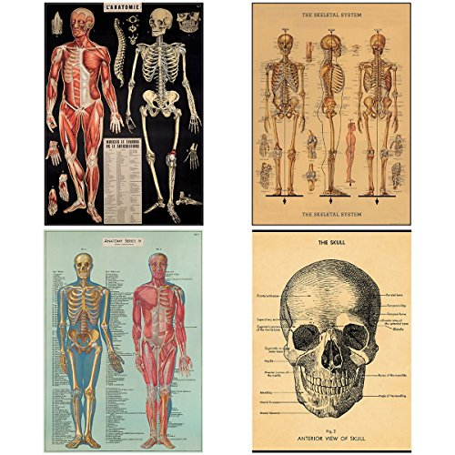 Human Body Vintage Style Biology Poster Set of 4 Decorative