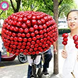 10Pcs/Bag Chinese Red Hawthorn Seeds,Sweet Fruit Seeds Can Eat Foods Plants for Home & Garden .May Tree Seeds .Haw Bonsai Seeds