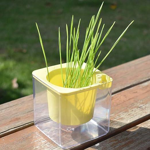 QDCITT - Juego de semillas de hierba para gatos (amarillo): Amazon.es: Productos para mascotas