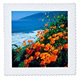 3dRose USA, California Poppies Along The Pacific