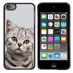 Cubierta protectora del caso de Shell Plástico || Apple iPod Touch 6 6th Touch6 || Gatito triste Manx Azules Pelo Corto @XPTECH
