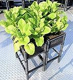 Medium Raised Vegetable Planter