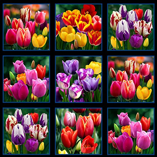 Digital Garden Tulips Panel (HD), Rich Color, 15 Tulips, Elizabeth's Studios, 23 inch Panel