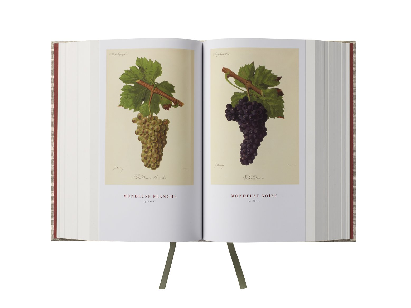 Wine Grapes: A complete guide to 1,368 vine varieties, including their origins and flavours: Amazon.es: Robinson, Jancis, Harding, Julia, Vouillamoz, José: Libros en idiomas extranjeros