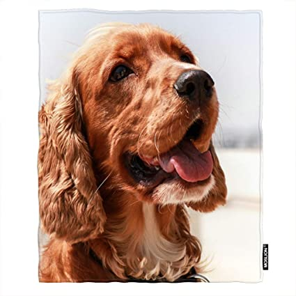 Please adult english cocker spaniel