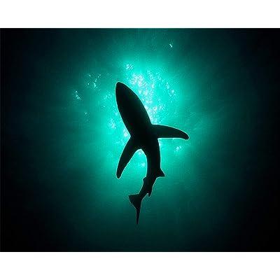 Rompecabezas Para Adultos 1000 Piezas Diy Tiburón Enorme En El Fondo Del Mar Imagen Para Decoración Del Hogar Regalo Encantador: Hogar