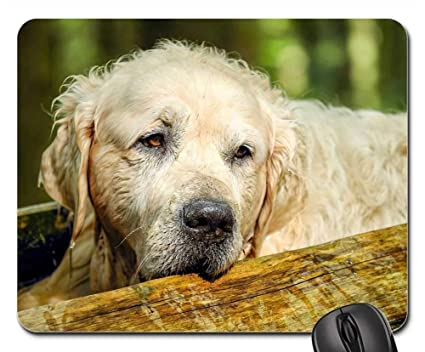 Amazon Com Gaming Mouse Pads Mouse Mat Golden Retriever Dog