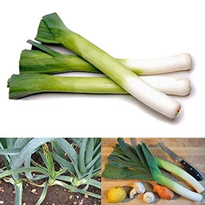 Airrais 50/100Pcs Giant Green Leek Seeds Healthy Food Organic Vegetable Seeds Home Garden Plants Green Onions Vegetables : Garden & Outdoor