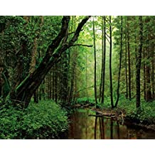 Posters: Forests Poster Art Print - A Silent Brook Runs Through The Woods (20 x 16 inches)