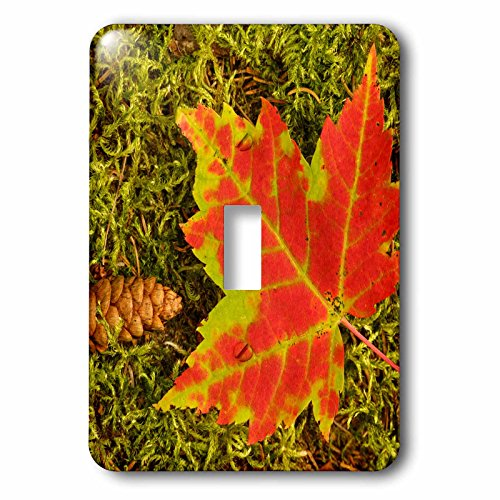 3dRose Danita Delimont - Botanical - Maple leaf and pine cone on moss, Upper Peninsula, Michigan. - Light Switch Covers - single toggle switch - Pine Desk Maple