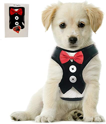 Jecikelon Bow Tie Dog Harness and Leash Set Classic Simple Style Dog Lead Adjustable Dogs Harness Training Dog Leash for Small Dogs
