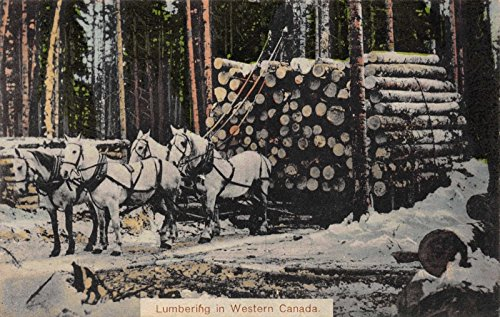 Tinted Postcard Lumbering in Western Canada, Horse Pulled Lumber Sled~118301