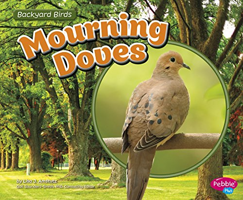 Mourning Doves (Backyard Birds)