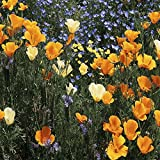 Southeast Wildflower Seed Mix - 5 Lb