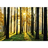 Non-woven photo wallpaper 350x245 cm PREMIUM PLUS Wall Mural Photo Wallpaper Picture - SUNLIGHT FOREST ll - Forest Trees Sunbeams Green Calmness - no. 062