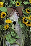 Pennsylvania Birdhouse and garden sunflowers by Nancy Rotenberg - 15'' x 22'' Giclee Canvas Art Print