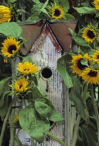 Pennsylvania Birdhouse and garden sunflowers by Nancy Rotenberg - 15'' x 22'' Giclee Canvas Art Print by Canvas Art USA