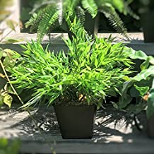 """Whole House Worlds The Realistic Bamboo Faux Potted Plant, Realistic Leaves and Stems, Square Black Pot, Approx. 15"""" Diameter and 9"""" Tall, By"""