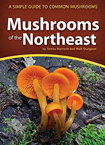 buy mushrooms of the northeast a simple guide to common mushrooms rh amazon in psychedelic mushroom guide book best mushroom guide books