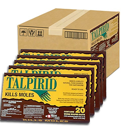 Talpirid Mole Worms - 5 Boxes (100 Worms) by Talpirid