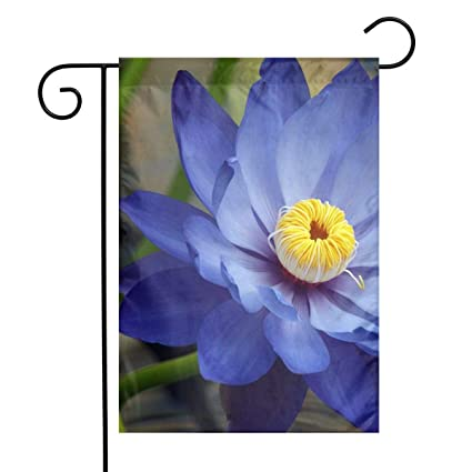 Amazoncom Blue Lotus Flower Meaning And Symbolism Garden Flag