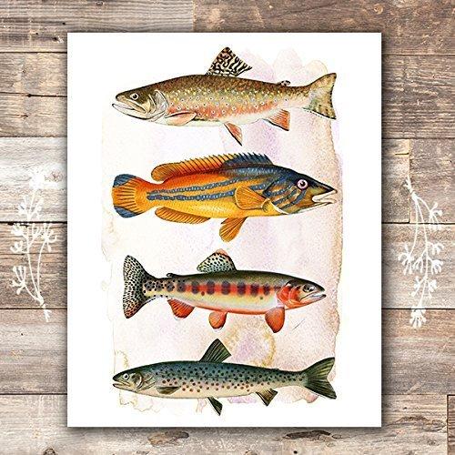 Vintage Fish Art Print - Unframed - 8x10