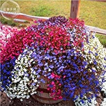 The Best Seller Trailing Lobelia Cascade Mixed Seeds, professional pack, 100 Seeds, bonsai balcony colorful flowers.
