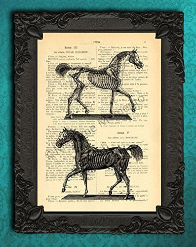 Amazon.com: Equine anatomy poster, horse anatomic art print, anatomy ...