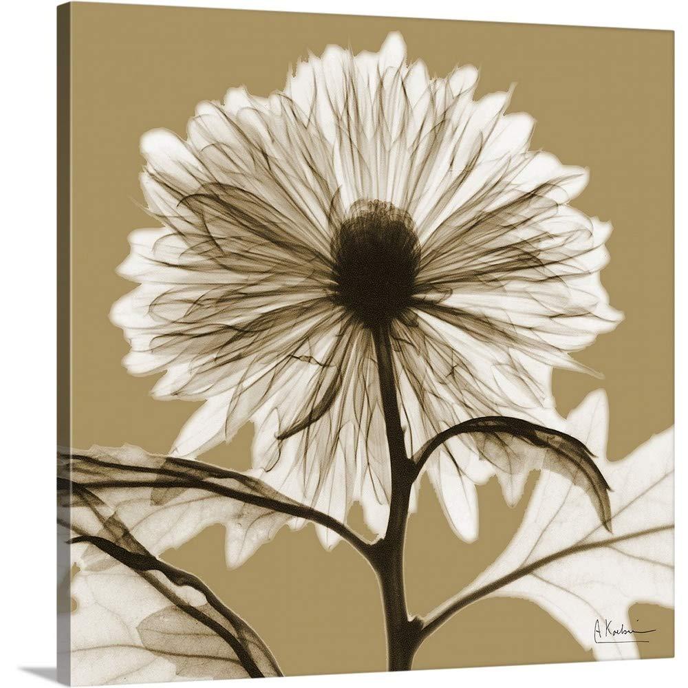 Albert Koetsierプレミアムシックラップキャンバス壁アート印刷題名セピア菊X線写真 36