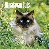 Himalayan Cats 2018 12 x 12 Inch Monthly Square Wall Calendar, Animals Cats Himalayan
