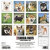Shiba Inus 2019 Wall Calendar (Dog Breed Calendar)