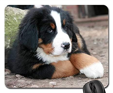 Amazoncom Gaming Mouse Pads Mouse Mat Puppy Bernese