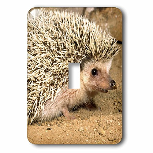 Hedgehog Single Switchplate Cover