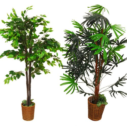 観葉植物2本セット B001SMTSAC
