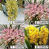 200 / Borsa, 16 tipi di semi di Mixed Capelli fiore di orchidea, piantine di diversi colori Cymbidium, Cymbidium misto Cicala all'ingrosso