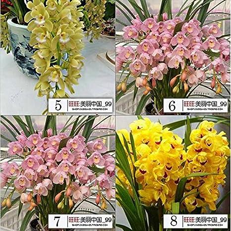 Orchidee Da Esterno.200 Borsa 16 Tipi Di Semi Di Mixed Capelli Fiore Di